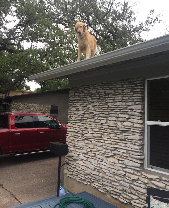 Huckleberry en el tejado