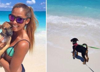 Isla llena de perros en busca de hogares para siempre
