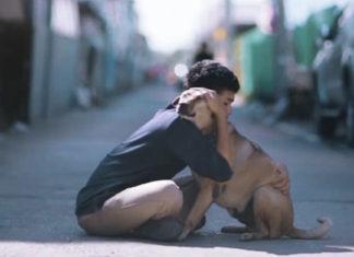 Joven tailandes abraza a perros sin hogar para incentivar a la adopción