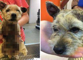 Jóvenes prendieron fuego a un perro y lamentablemente éste falleció