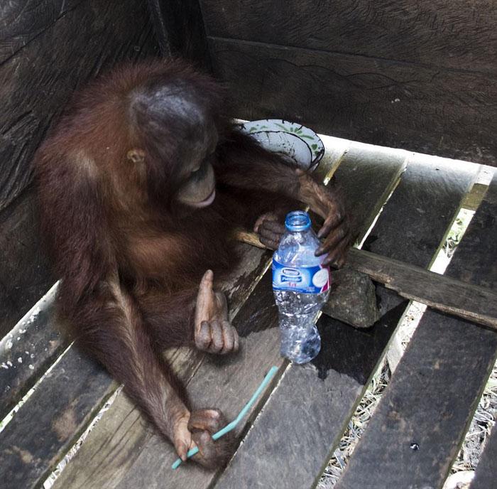 Kotap solo tenía un pitillo y una botella
