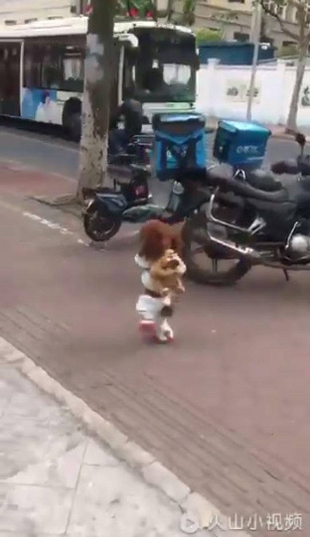La verdad detrás de los perros que caminan erguidos