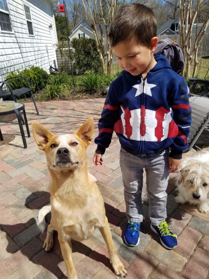 Niño y sus perros