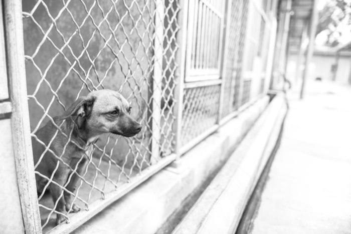 Perra abandonada en un refugio se encontraba muy triste
