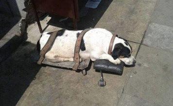 Perro atado en la estacion del tren en peru