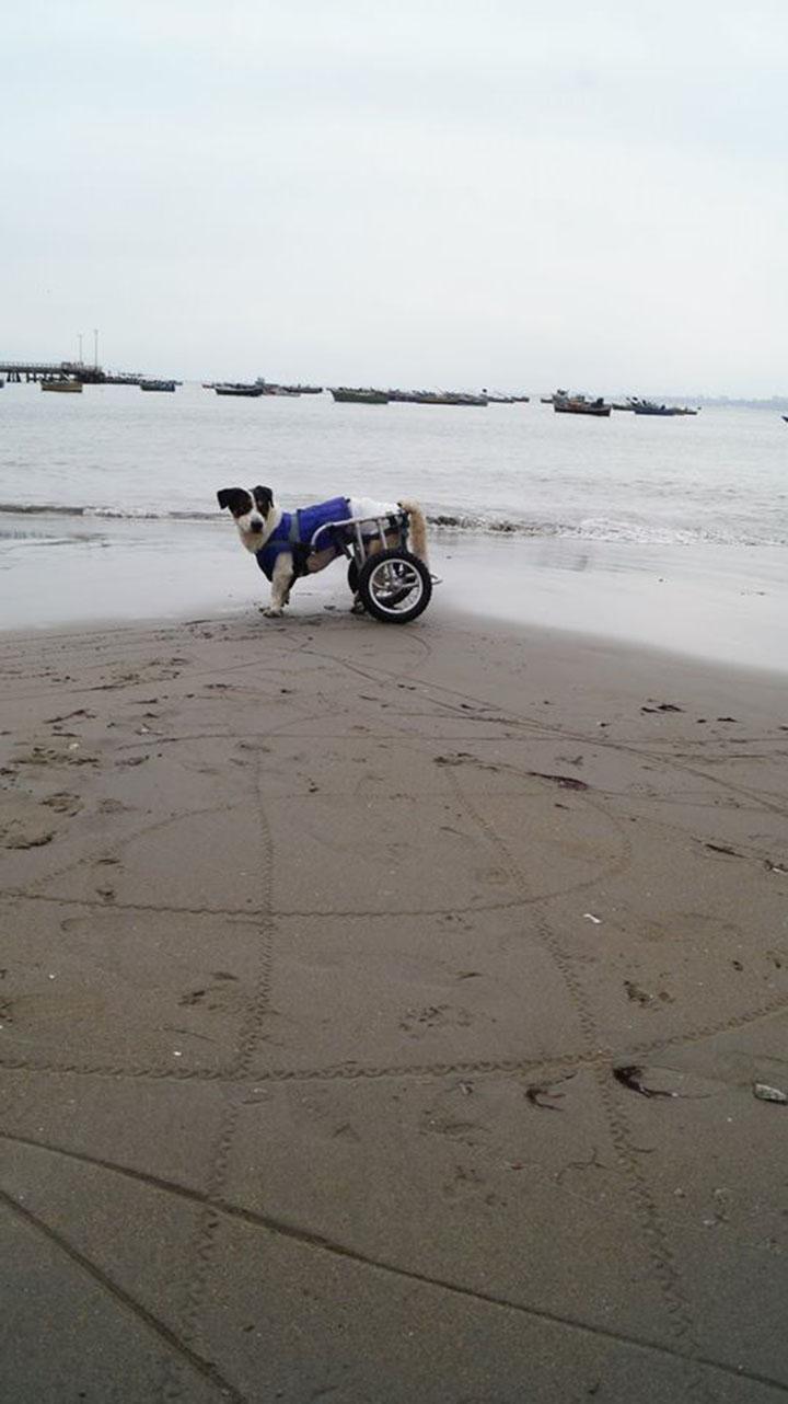 Perro disfruta de la playa