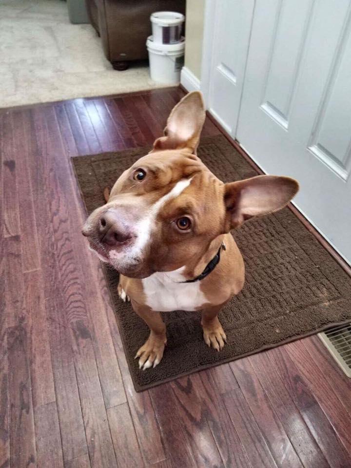 Perro en hogar de acogida