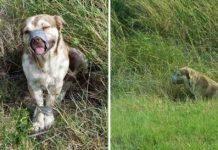 Perro fue abandonado con su hocico y patas atadas con cinta adhesiva
