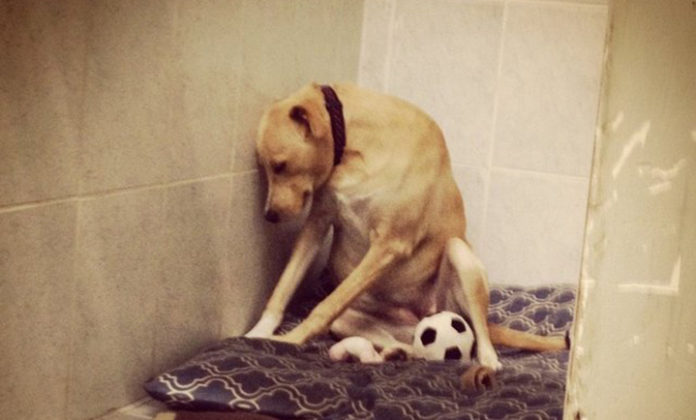 Perro más triste del mundo