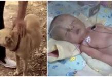 Perro salva a bebé enterrado vivo