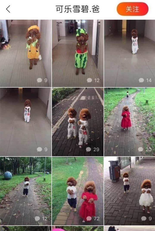 Perros caminando