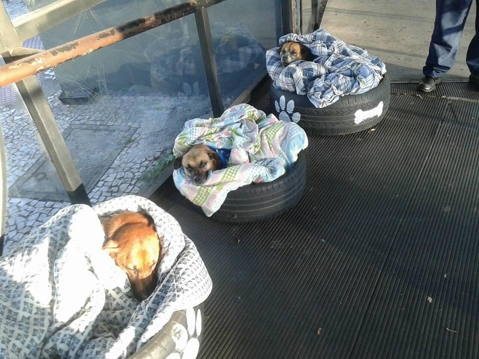 Perros tienen refugio en estación de autobús