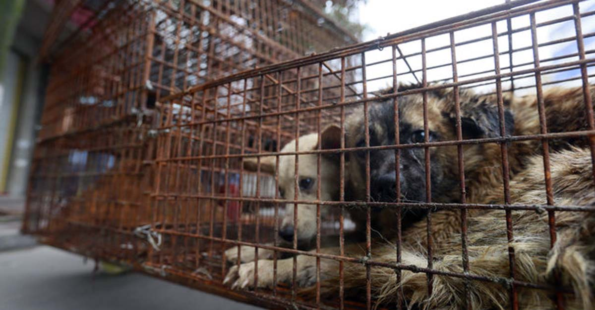 Prohíben el consumo de carne de perro en el Festival de Yulin en China