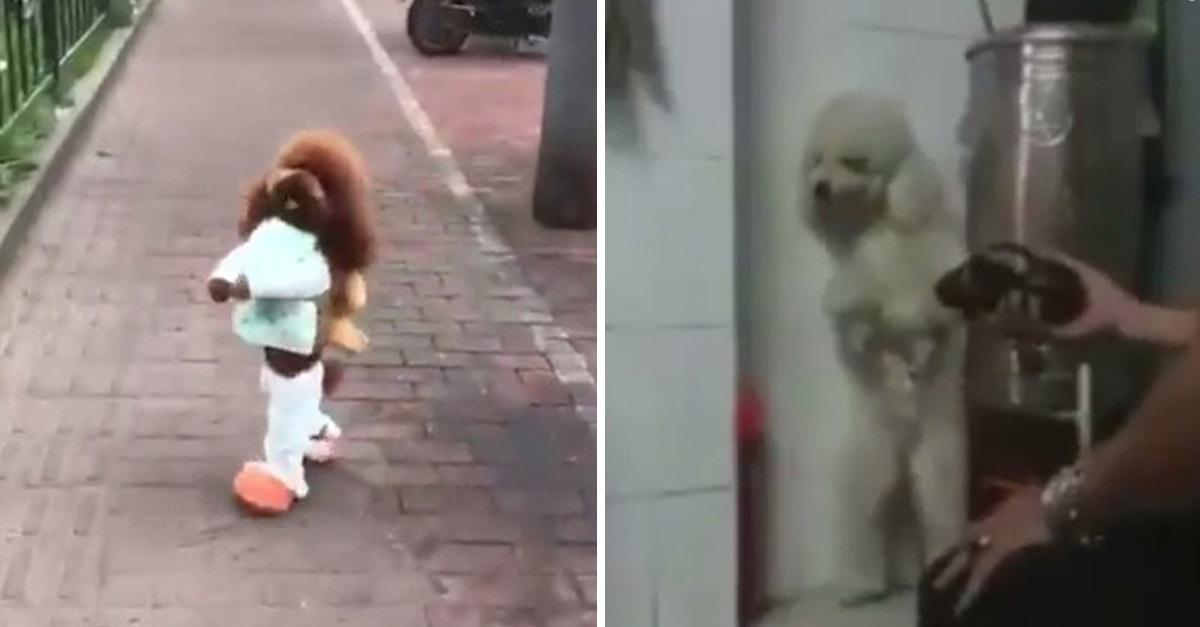 Terrible historia de maltrato animal sobre los perros que caminan erguidos