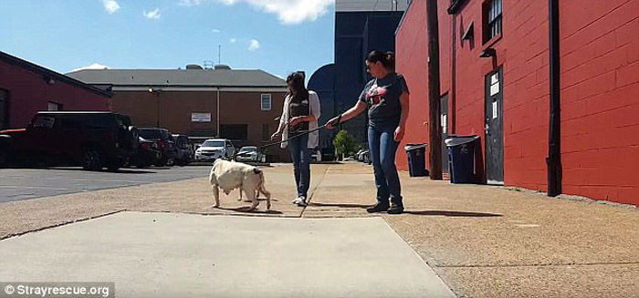 Treya está recibiendo atención veterinaria