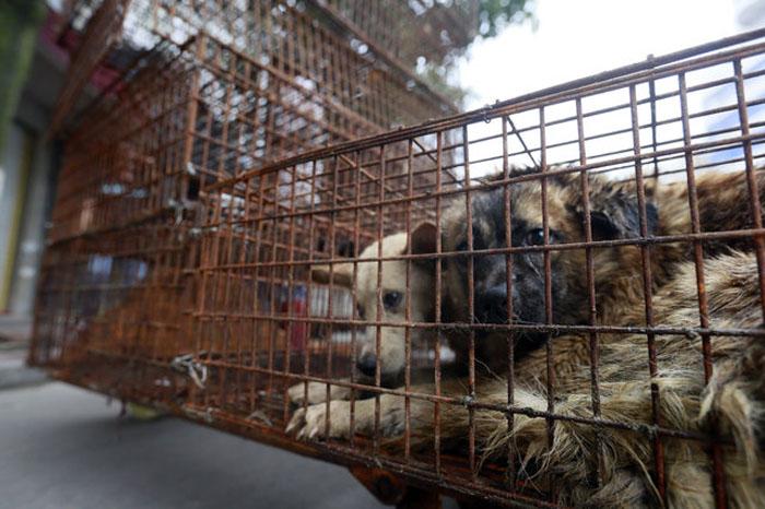 Prohíben consumo de carne de perro