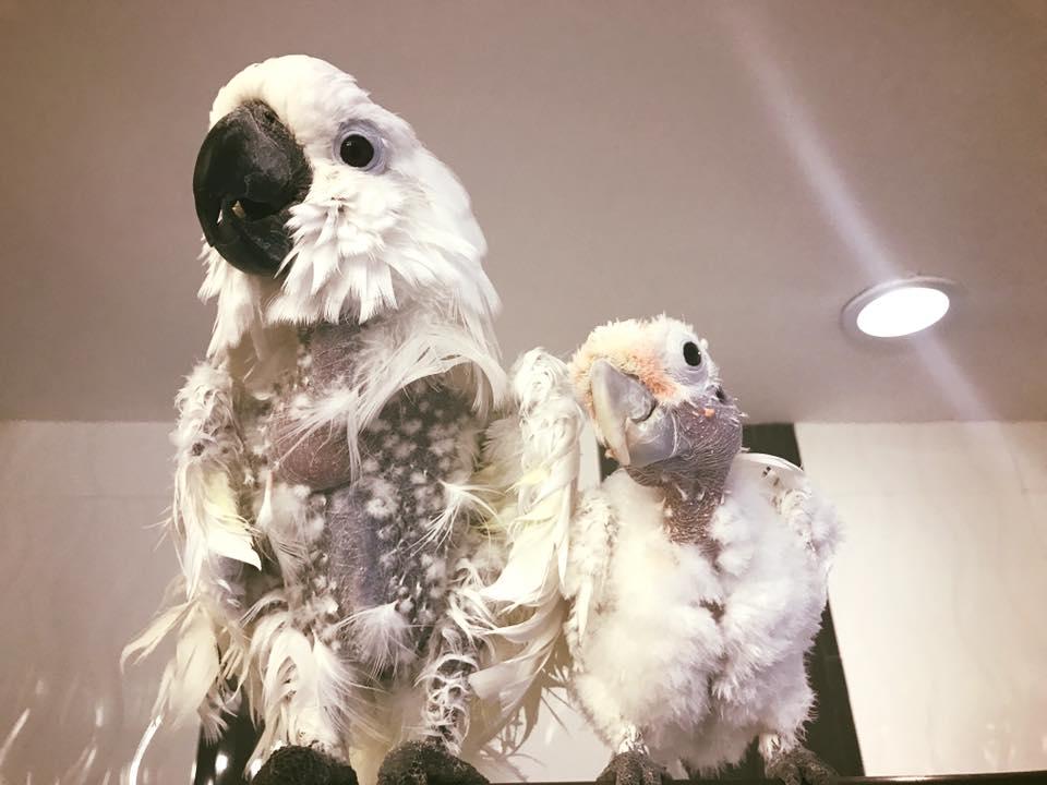 Aves rescatadas