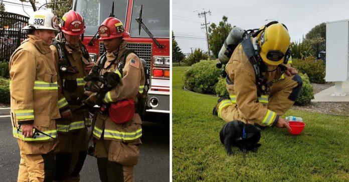 Bomberos salvaron a un perro que se encontraba atrapado en un incendio