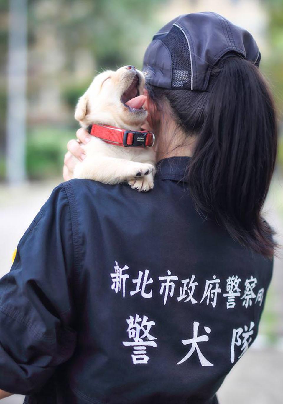 Cachorro en la policía de Taiwán
