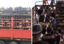 Camión con más de 800 perros que iban a ser sacrificados fue detenido