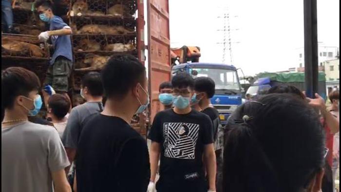Camión transportaba 800 perros que iban a ser sacrificados
