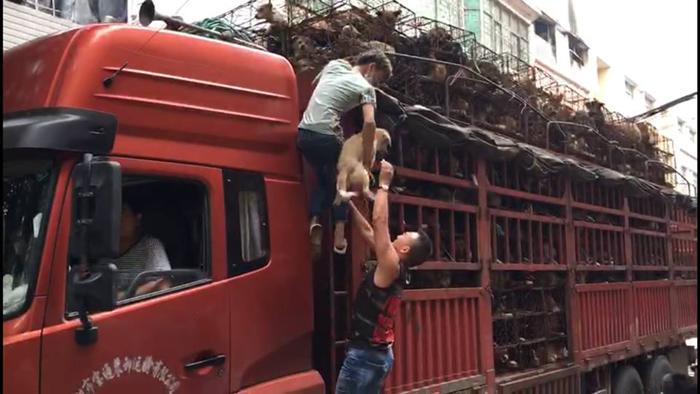Camión transportaba 800 perros