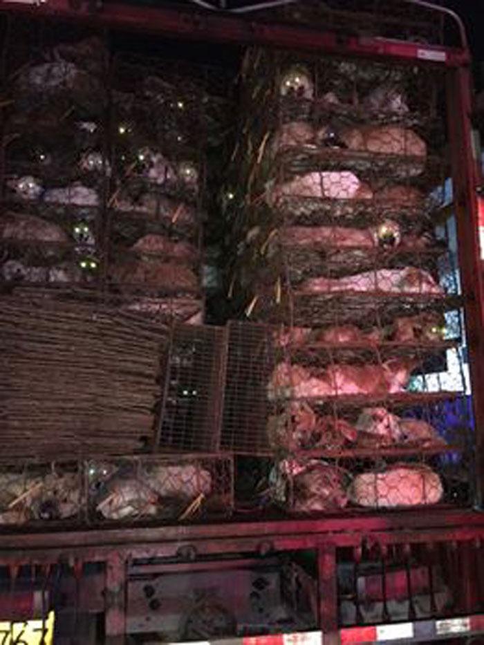 Comercio de carne de perro en China