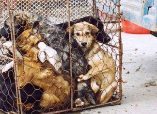 Continúa la venta de carne de perro en el Festival de Yulin en China