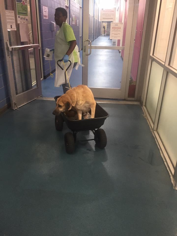 Edessa en el veterinario