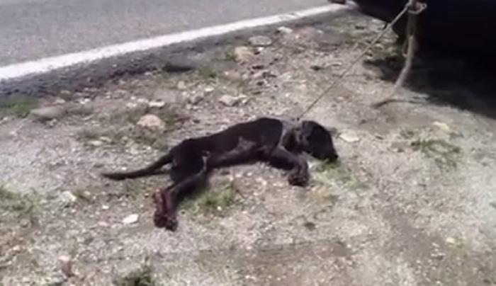La perra se encontraba agonizando