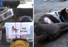 En indonesia la carne de perro es vendida como si fuera pollo