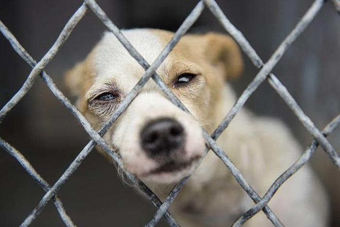 Esta perra en un refugio solo busca un poco de amor