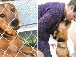 Este perro fue encerrado y abandonado por su familia, pero ahora es feliz