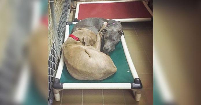 Estos perros de refugio se niegan a dormir en diferentes camas