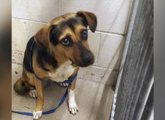 Familia abandona perro en refugio y se va de vacaciones