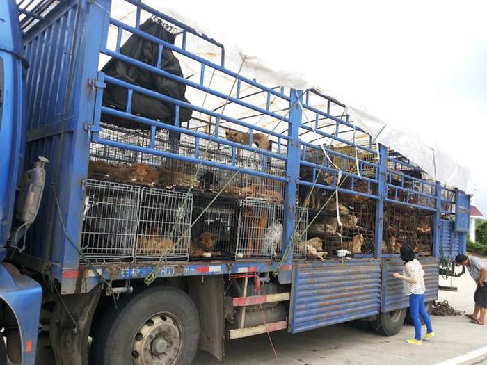 Festival de Yulin en China