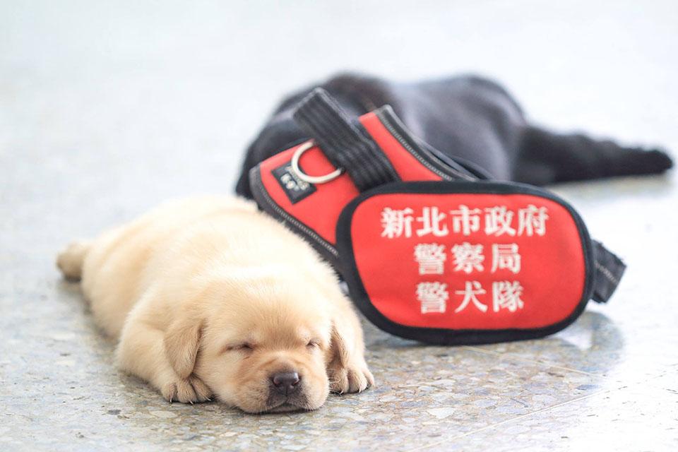Fushin durmiendo