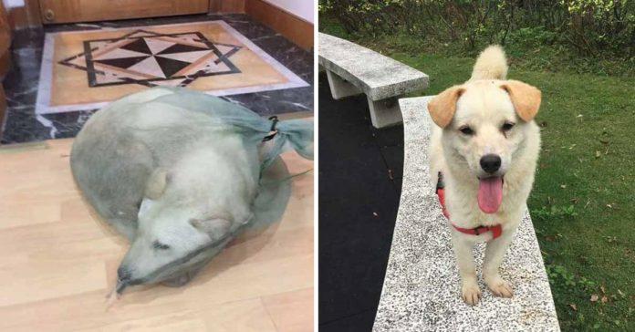 Hombre salvó a un perro que estaban vendiendo para consumir su carne