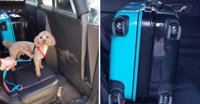 Hombre vio una maleta en el bosque y halló a un adorable perro adentro