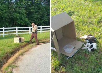 Indefenso cachorro fue abandonado en una caja al lado de la carretera
