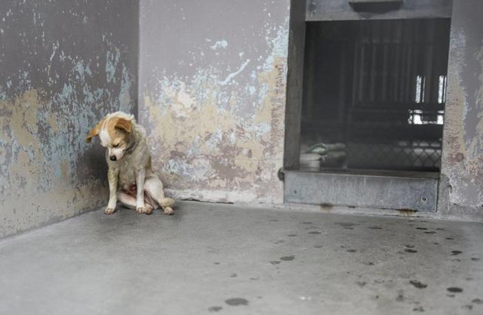 La perra se encontraba muy triste