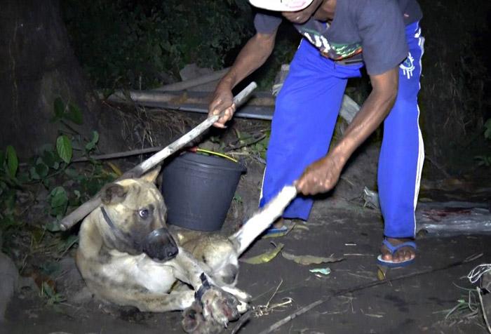 Los perros son cruelmente asesinados