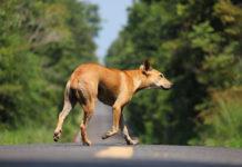 Multas a quienes rescaten animales abandonados