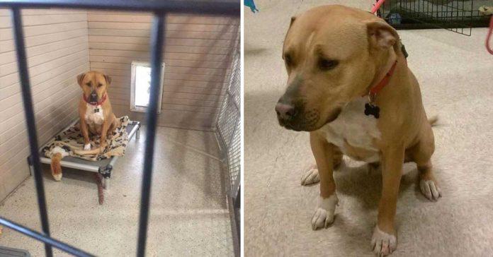 Nadie quiere adoptar a este perro y no se entiende el por qué