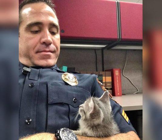 Oficial de la policía adoptó a una linda gatita que se encontraba perdida