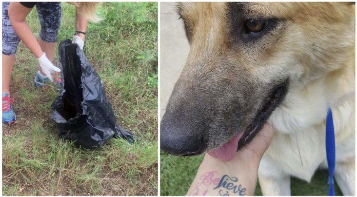 Perra llevaba a su cachorro muerto a todas partes