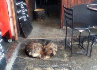 Perra sin hogar en restaurante
