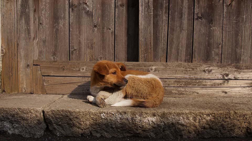 Perro abandonado