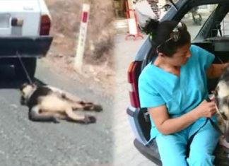 Perro arrastrado por un auto