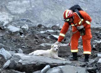 Perro busca su familia entre escombros